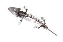 Dinosaur's skeleton Stock Photos