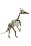 Dinosaur's skeleton Stock Photography