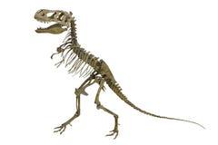 Dinosaur's skeleton Royalty Free Stock Images
