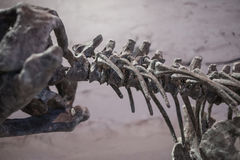 Dinosaur skamieliny Obrazy Royalty Free