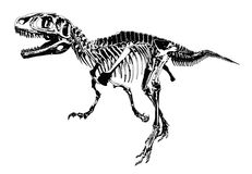 Dinosaur skeleton. Animals illustration vector Stock Photography