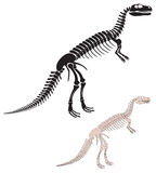 Dinosaur skeleton. The figure shows the skeleton of a dinosaur Stock Images