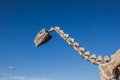 Dinosaur skeleton. At the visitor center of Talampaya National Park, Argentina Stock Photography