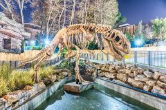Dinosaur skeleton in amusement park at night. Scenic dinosaur skeleton inside an amusement park at night Royalty Free Stock Photo