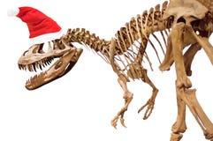 Dinosaur skeleton with Christmas hat on white isolated background.  stock photos