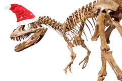 Dinosaur skeleton with Christmas hat on white isolated background. Dinosaur skeleton with Christmas hat on white isolated background stock photo