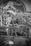 Dinosaur skeleton details Royalty Free Stock Image