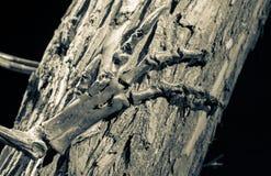 Dinosaur skeleton - foot stock photo