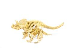 Dinosaur skeleton model isolated on white - Stock Image Stock Photos
