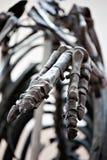 Dinosaur skeleton palm closeup Royalty Free Stock Photo