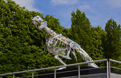 Dinosaur Skeleton In Paris on the Seine Royalty Free Stock Images