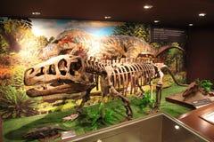 Dinosaur skeleton Stock Photos
