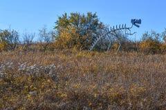Dinosaur Skeleton Sculpture in Field Stock Images