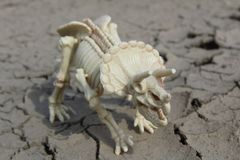 Dinosaur skeleton of Triceratops on parched ground. This is skeleton of Triceratops - toy Royalty Free Stock Images