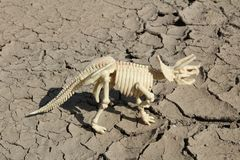 Dinosaur skeleton of Triceratops. This is skeleton of Triceratops - toy Stock Images