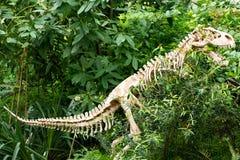 Dinosaur skeleton royalty free stock images