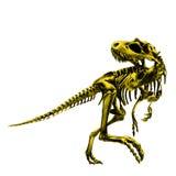 Dinosaur skeleton Tyrannosaurus Stock Image