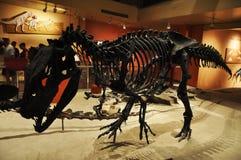 Dinosaur Skeleton in Washington Museum Stock Images