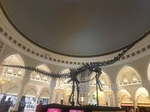 Dinosaur Skelton in dubai mall discovered in 2004 royalty free stock photo