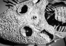 Dinosaur skull Stock Image