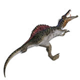 Dinosaur Spinosaurus Royalty Free Stock Images
