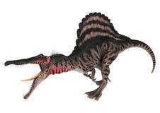 Dinosaur Spinosaurus Stock Images