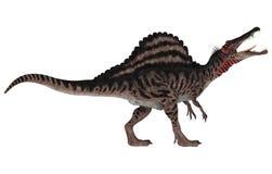 Dinosaur Spinosaurus Royalty Free Stock Image