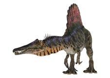 Dinosaur Spinosaurus Stock Photo
