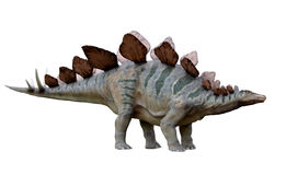 Dinosaur Stegosaurus. Isolated on white background royalty free stock photo