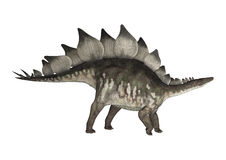 Dinosaur Stegosaurus Stock Photography