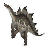 Dinosaur Stegosaurus Royalty Free Stock Images