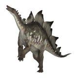 Dinosaur Stegosaurus. 3D digital render of a dinosaur stegosaurus isolated on white background Royalty Free Stock Images