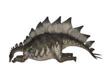 Dinosaur Stegosaurus. 3D digital render of a dinosaur stegosaurus resting isolated on white background Royalty Free Stock Photography
