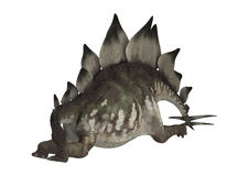 Dinosaur Stegosaurus. Stegosaurus Stenops or roofed lizard, a large herbivore dinosaur from the Late Jurassic Period Stock Photo