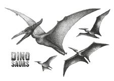 Dinosaur in stippling technique. Graphic flying pterodactyls. Vector dinosaurs isolated on white background. Animal of the prehistoric period in stippling Royalty Free Stock Images