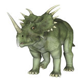 Dinosaur Styracosaurus. 3D digital render of a dinosaur Styracosaurus or spiked lizard, a genus of herbivorous ceratopsian dinosaur from the Cretaceous Period ( Royalty Free Stock Photo