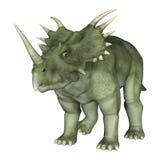 Dinosaur Styracosaurus Royalty Free Stock Photo