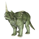 Dinosaur Styracosaurus. 3D digital render of a dinosaur Styracosaurus or spiked lizard, a genus of herbivorous ceratopsian dinosaur from the Cretaceous Period ( Royalty Free Stock Photography
