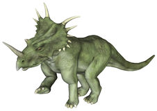 Dinosaur Styracosaurus. 3D digital render of a dinosaur Styracosaurus or spiked lizard, a genus of herbivorous ceratopsian dinosaur from the Cretaceous Period ( Royalty Free Stock Photos