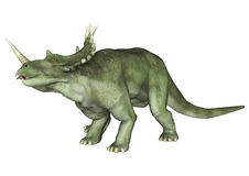 Dinosaur Styracosaurus Stock Image