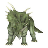 Dinosaur Styracosaurus. 3D digital render of a dinosaur Styracosaurus or spiked lizard, a genus of herbivorous ceratopsian dinosaur from the Cretaceous Period ( Stock Image