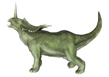 Dinosaur Styracosaurus Royalty Free Stock Photo