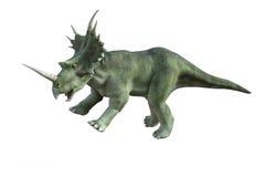 Dinosaur Styracosaurus Stock Photos