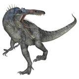 Dinosaur Suchomimus Royalty Free Stock Photos