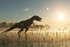 Dinosaur at sunrise. Tyrannosaurus in prehistoric landscape, 3d Royalty Free Stock Photos