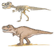 Dinosaur T-Rex Obraz Stock