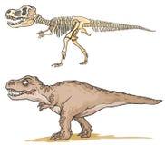 Dinosaur T-Rex. Stock Image