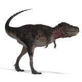 Dinosaur Tarbosaurus. 3D rendering with clipping path and shadow over white Stock Photos