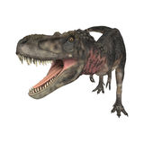 Dinosaur Tarbosaurus Stock Photography