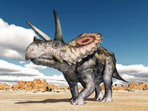 Dinosaur Torosaurus Stock Photography
